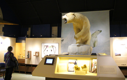 Peary-MacMillan Arctic Museum polar bear display